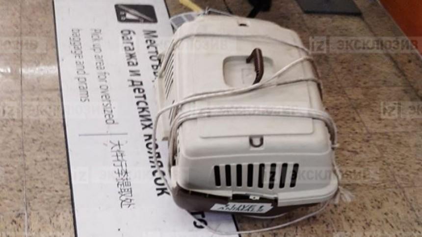Хозяин кошек, погибших из-за грузчиков в«Шереметьево»: «Жду уголовного дела»