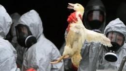 Вспышка птичьего гриппа H5N1 зафиксирована вКитае