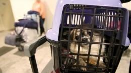 Когда вРоссии можно будет купить билет для собаки или кота?