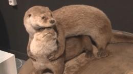 «Каждой твари попаре»: скандал разгорелся из-за выставки, посвященной брачному периоду животных