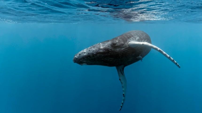 Завораживающие фотофакты коДню кита
