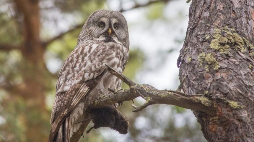 День орнитолога вРоссии: Фото птиц вдикой природе