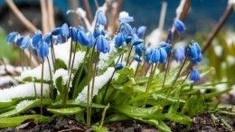 Первый день весны: приметы ипредостережения