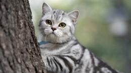 Ласковый, суровый или недотрога? Как масть кота влияет насудьбу хозяев