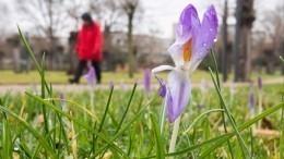 Наевропейской территории России вместо весны настанет лето