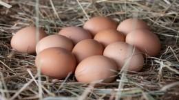 Ученые назвали безопасное для здоровья количество яиц вдень