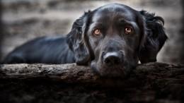 ВЯкутске нашли контейнер ссотней мертвых собак икошек