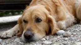 ВЯкутии объяснили умерщвление 200 животных борьбой сбешенством