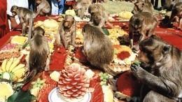 Голодные обезьяны атаковали жителей впровинции Таиланда