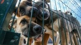 Закон обездомных животных: почему его исполнение невыгодно врегионах
