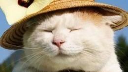 Фото: ВЯпонии умер знаменитый кот, познавший нирвану