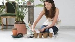 Как правильно пересаживать комнатные растения?