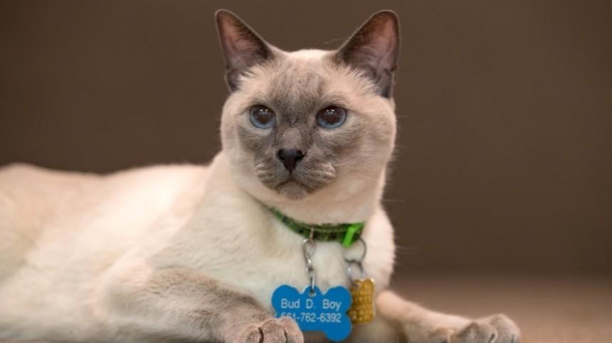 Пять пород кошек-талисманов, притягивающих удачу исчастье вдом