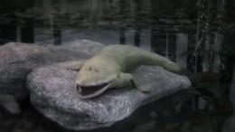 Ученые нашли недостающее звено эволюции— рыбу спротопальцами