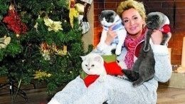 Гулькина нарушает режим карантина ради любимого кота