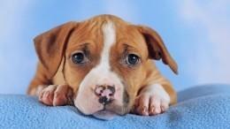 Замурованного щенка спасли вПетербурге— кадры спецоперации