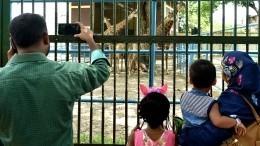 Мельбурнский смотритель зоопарка покорил пользователей сети энергичными танцами