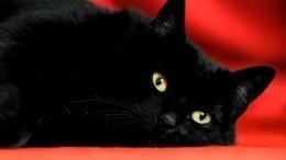 «COVID-19— это нешутки»: коты «взорвали» сеть дерзким сражением через окно