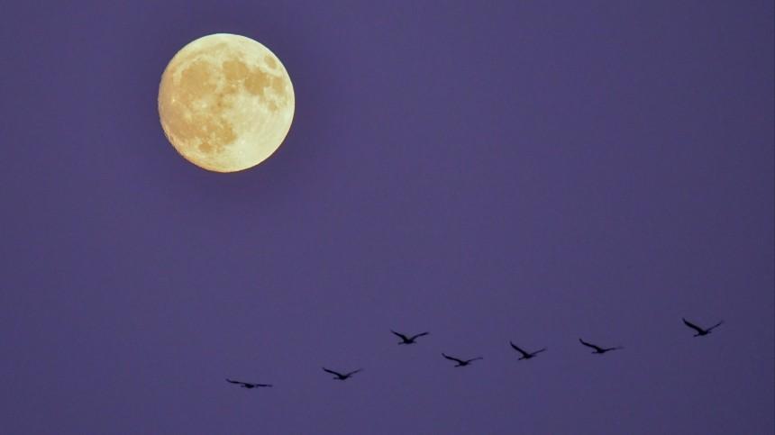 Лунный календарь наапрель 2020: когда ожидать лучший день вгоду?