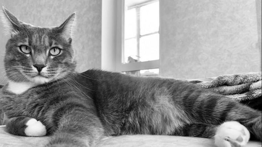 ВХабаровске продается «кот-оберег» откоронавируса зашесть миллионов рублей
