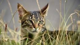 Коронавирус грозит вымиранием кошек— китайские ученые