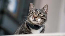 Кошка заразилась коронавирусом отчеловека вГонконге