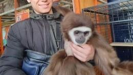 Иркутский зоопарк приютил обезьян, которые лишились дома из-за коронавируса