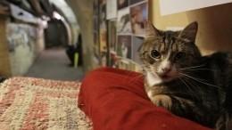 Эрмитаж показал, как живут коты музея накарантине