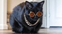Дело было всамоизоляции, делать было нечего: кошачий показ мод покорил пользователей сети