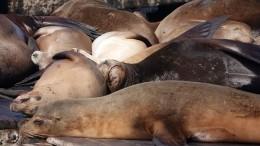 Морские львы захватили аргентинский курорт— видео