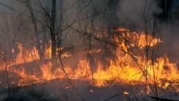 Масштабная борьба слесными пожарами развернулась вСибири