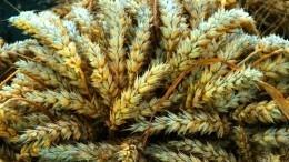Экспорт зерна изРоссии приостановят до1июля
