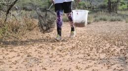 Восточную Африку атаковали полчища саранчи— жуткое видео