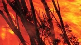 Более 60 тысяч гектаров леса горит вСибири инаДальнем Востоке