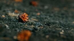 СКвыехал наместо предполагаемого поджога леса, вкотором подозревают иркутских чиновников