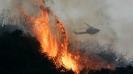 «Будут наказаны»: глава Приангарья овозможном поджоге леса, вкотором подозревают чиновников