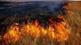 Пропавшие иркутские чиновники, подозреваемые впопытке поджечь лес, нашлись