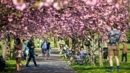 Как провести майские праздники всамоизоляции?