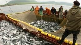 Эпидемия COVID-19 неугрожает промыслу рыбы наКамчатке