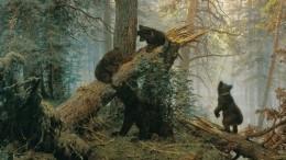 «Утро всосновом лесу»: троих медвежат намакушке ели заметили наСахалине