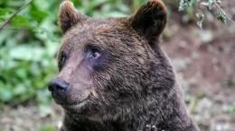 ВТынде медведь раскопал могилу иоткусил покойнику голову— видео