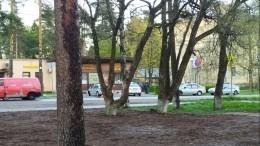 Камеры сняли, как иномарка сбила велосипедиста на«зебре» вПетербурге