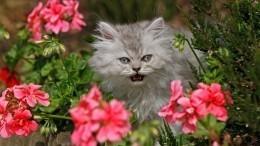 Нечистая сила? Почему кошки неожиданно начинают вдоме кричать