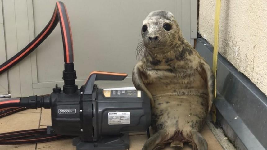 Тюлененок пытался сбежать изцентра реабилитации, нозаплутал вкоридорах— фото