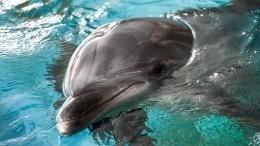 Питомцы петербургского дельфинария могут остаться без еды