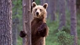 Вот так символ! Медведи атаковали жителей Ярославля