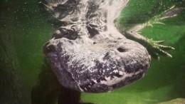 ВМосковском зоопарке умер «крокодил Гитлера»