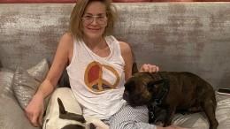 Видео: Шерон Стоун собственноручно делает педикюр любимому бульдогу