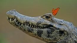 Видео нежного танца мужчины скрокодилом вводоеме