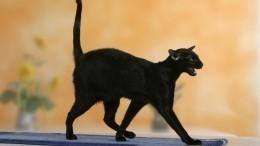 Кчему снятся кошки, крысы идругие животные? Отвечает звезда «Битвы экстрасенсов»